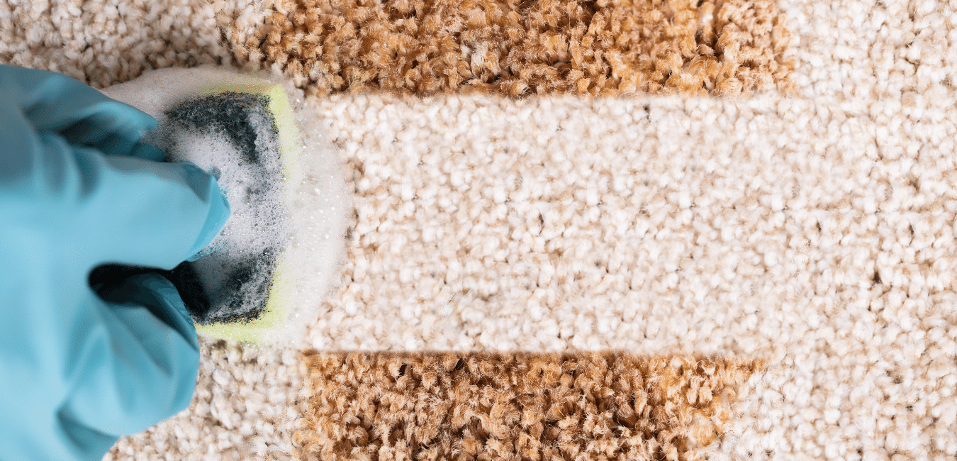 carpet stain removal cleaning services near me