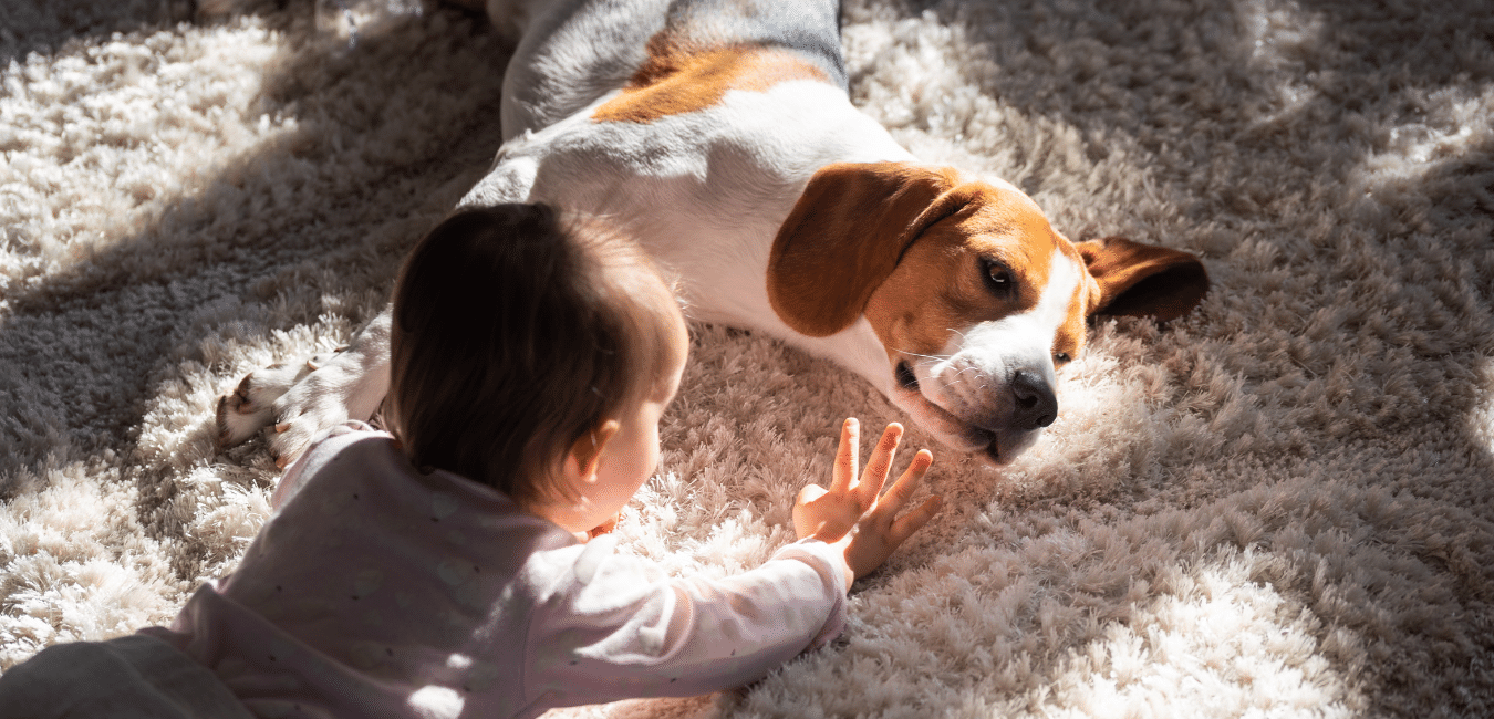pet carpet cleaning services for families